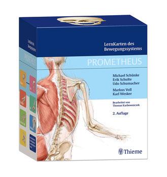 PROMETHEUS LernKarten des Bewegungssystems – handliches Wissen für die Ausbildung in der Physiotherapie, Osteopathie oder Schulmedizin