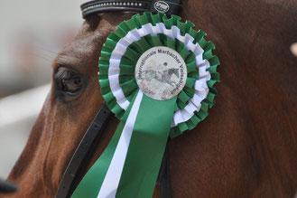 Sachverständigenbüro Pferde Gutachten Sachverständige Gutachter Pferdesachverständige