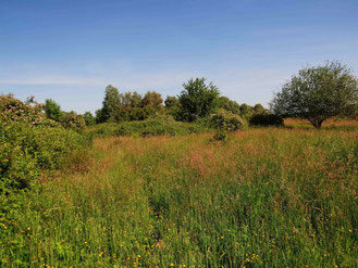 Biotopvielfalt auf Maria Theresia (Foto: Wolfgang Voigt)