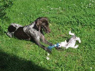 Welpe Welpentraining Onlinetraining Hundetraining