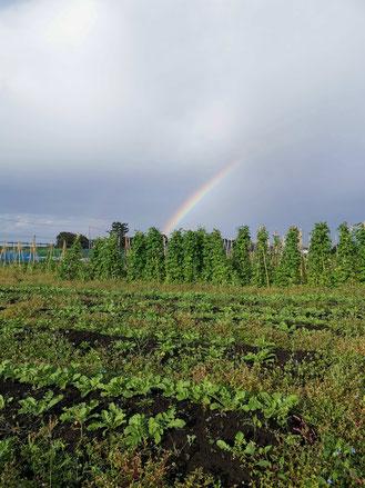 札幌市清田区にある就労継続支援B型事業所のプレマハウスでは自然栽培を障がいのある方と共に、世の中に広めていきたいと思っております。