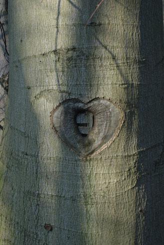 Foto: Ein Herz für Buchen (© P.Ludwig-Sidow)