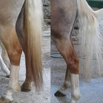 Vor dem Waschen und nach dem Waschen mit dem CXEVALO Shampoo