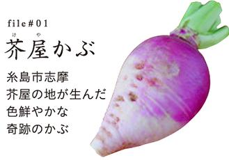 博多伝統野菜「芥屋かぶ」