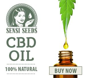 Sensi Seeds CBD Oil