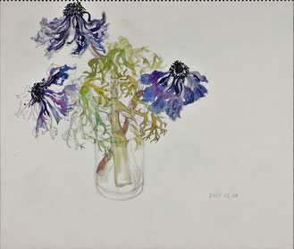 Wilted Anemones 萎れたアネモネ ( Pencil drawing, Watercolor painting, Dessin)