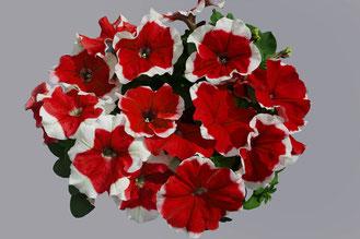 фото с сайта http://hemgenetics.com