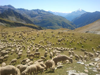 Alpage en Savoie