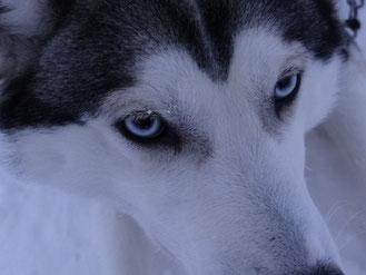 Mariska, een geweldige hond!