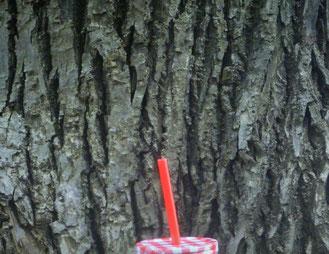 Baumrinde - Seinen Wesenskern finden
