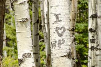5 ans de Mariage : Graver ces initiales sur un arbre