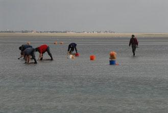 Char à voile à Fort mahon ou Quend plage