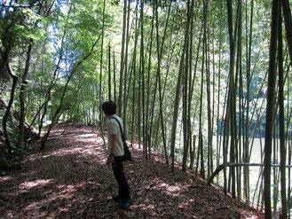 竹林のデザイナー