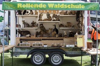 Foto: Ausstellung von Tierpräparaten