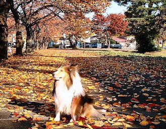 2005.10.13 Cherry-trees Avenue