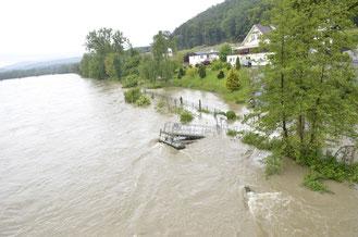 Die Aare bringt Hochwasser (Felsenau)