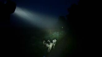 Dogscooting im Nebel am Kanal