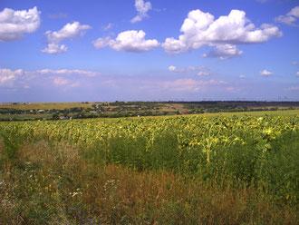 Великобілозерські  поля