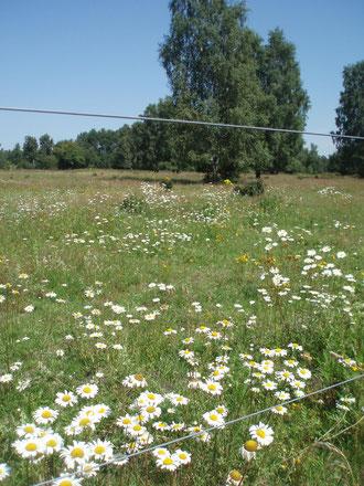 Ein Erfolgsprojekt des NABU Elmshorn seit 1984: Ankauf und Gestaltung von Flächen für den Naturschutz