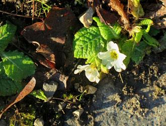 Blume, Winter, blühen