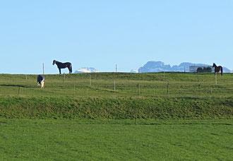 Weide, Pferde, Wiese