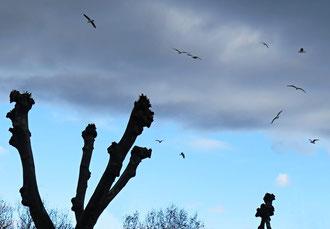 Himmel, Vögel, Möwen