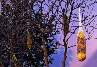 Vogelfutter, Füttern im Winter