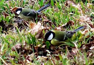 Maisen, Vögel im Winter