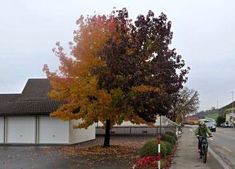 Herbstbaum, Laub, zweifarbig
