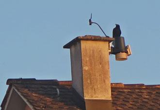 Vogel, Krähe, Dach