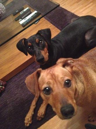 Cosmo und Stella sind ein prima Team ;-)