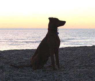 Sonnenuntergang am Strand ;-)