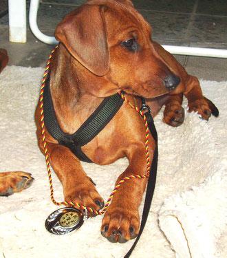 Onnie, (13 Wo.) 2. beim Hunderennen