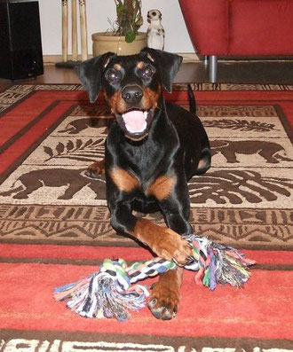 16.12.2012, Diego 14,5 Monate alt  ;-)
