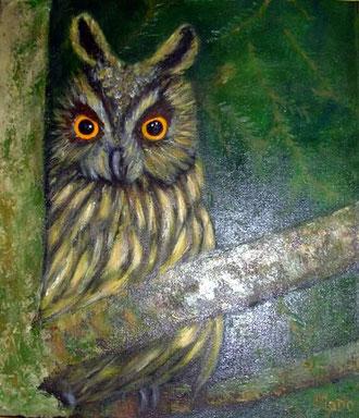 Grand duc en forêt domaniale peint en 2013 : à vendre sans encadrement (petite toile à l'huile de 26 x 30 cm)