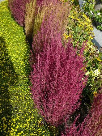 Bunte Blüten und Maulbeerbäume, die Nahrung für Seidenspinner und ihre Raupen