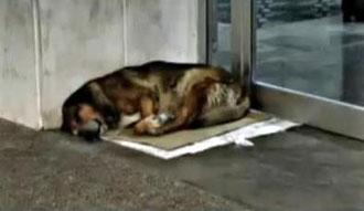Canelo junto a la puerta del Hospital Puerta del Mar. Foto extraída de internet