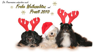 Die Powernasen Tibet Terrier Chin & Hermine und Sheltie Leo wünschen gemeinsam mit Frauchen Nadine  FROHE WEIHNACHTEN und PROSIT 2010!