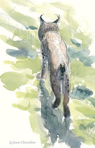 lynx pardelle aquarelle Jean Chevallier