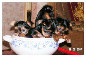 Варькины щенки