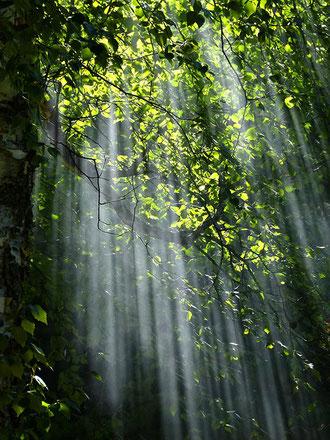 """""""bild"""" Wald,  Spirits, Schamanismus"""