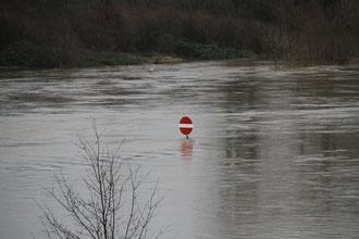 Hochwasser in Mannheim im Januar 2011