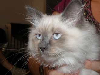 Goloubika (maintenant rebaptisée Kalinka) à trois mois, départ dans sa nouvelle famille!