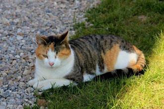 Katze Fibi