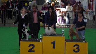 Super, Drusus de Asciburgium Platz 2. der Gruppe 9, mit Laura,............ Richter: Herr J.G.A. Boelaars. NL.