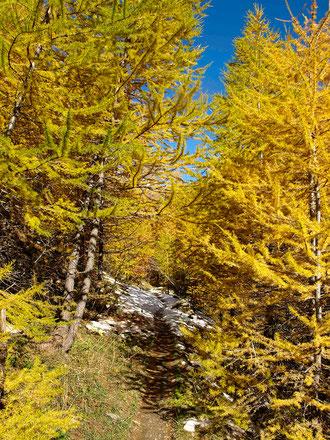 Sentier d'automne dans le Briançonnais