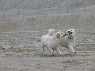 Smilla und Jule beim Kampf ums Frisbee