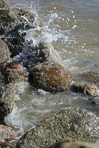 Von Seepocken besetzte Steine am Strand von Blåvand …
