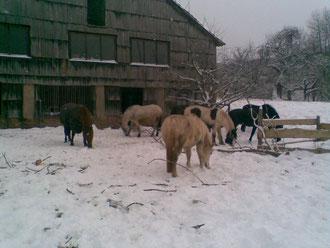 die Pferde können selbst entscheiden ob sie im Stall oder draußen sein wollen
