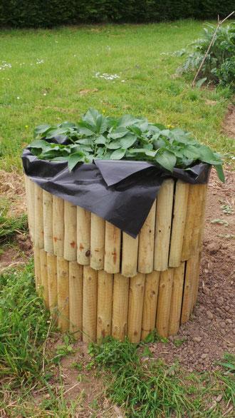 tour pommes de terre site de les jardins de la douvette. Black Bedroom Furniture Sets. Home Design Ideas